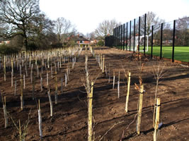 We can handle projects involving thousands of trees and shrubs